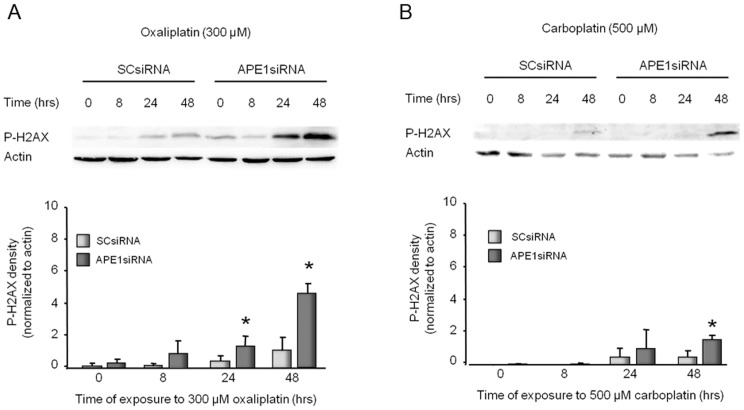 Platinum-induced phosphorylation of H2AX in sensory neuronal cultures is increased by reducing APE1 expression. The top panels show representative Western blots of phospho-H2AX (P-H2AX) and actin from cultures prior to and after 8, 24 and 48 hours of exposure to 300 µM oxaliplatin (A) or 500 µM carboplatin (B). Cultures were exposed to SCsiRNA or APE1siRNA as indicated. The bottom panels represent the densitometry of P-H2AX expression normalized to actin from three independent experiments. The columns represent the mean ± SEM from cultures treated with SCsiRNA (lightly shaded columns) or APE1siRNA (heavy shaded columns) prior to or after exposure to 300 µM oxaliplatin (A) or 500 µM carboplatin (B). An asterisk indicates a statistically significant increase in P-H2AX density in cells treated with APE1siRNA compared to those treated with SCsiRNA. Cisplatin data can be found in our previous publication [24] .