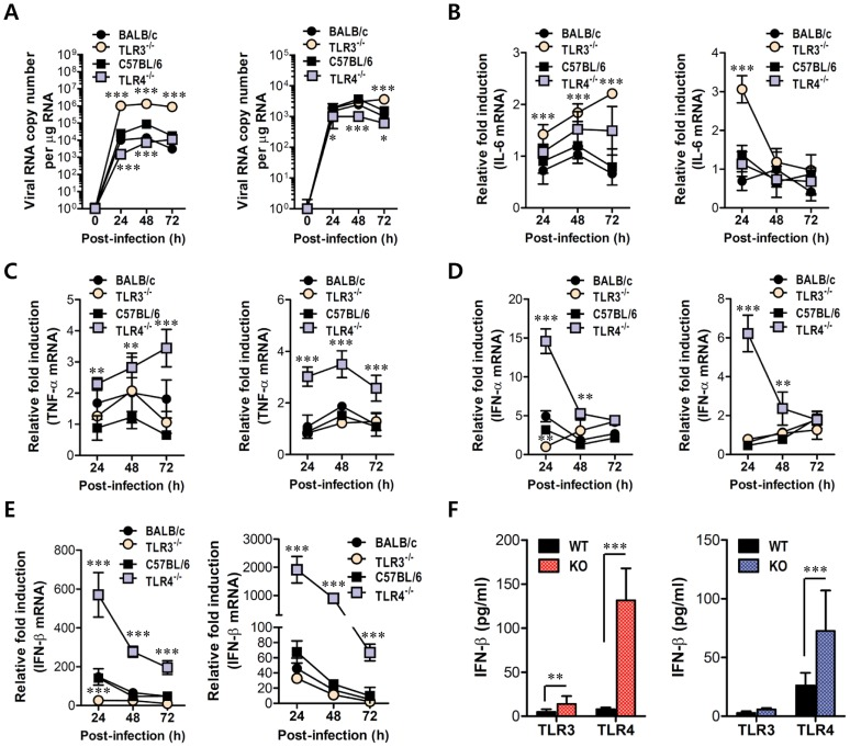 Virus control and type I IFN responses of myeloid cells derived from TLR3 −/− and TLR4 −/− mice to JEV infection. Primary bone marrow-derived DCs (BMDC) and macrophages (BMDM) recovered from TLR3 −/− and TLR4 −/− mice were infected with JEV at a MOI of 1.0 for viral replication and 10 for cytokine expression. A . JEV replication in BMDC and BMDM. Viral RNA replication was expressed by viral RNA copy number per microgram of total RNA. B and C . The expression of pro-inflammatory cytokines (IL-6 and TNF-α) in infected BMDC and BMDM. D and E . The expression of type I IFNs (IFN-α and β) in infected BMDC and BMDM. F . The secretion of IFN-β protein by infected BMDC and BMDM. The mRNA levels of the indicated cytokines were determined by real-time qRT-PCR and the cytokine levels in culture media were determined by ELISA. Data represent the average ± SD derived from BMDC and BMDM evaluated in quadruplicate. *, p