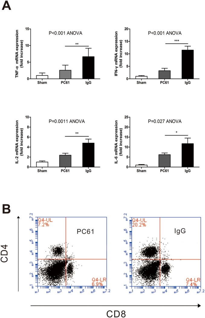 Anti-CD25 mAb pretreatment mitigated intrahepatic inflammatory milieu. (A) TNF-α, IFN-γ, IL-2, and IL-6 mRNA expression among sham, PC61, and I/R group after hepatic ischemia and 60 min of reperfusion. Samples were analyzed by RT-PCR. Data are expressed as means±SE; n = 6 per group. (B) Splenocytes were labeled with 5 mM 5-(and-6)-carboxyfluorescein diacetate, succinimidyl ester and co-cultured with samples' protein in 5% CO 2 at 37°C. After 72 hours proliferation was assessed by flow Cytometry. (*p