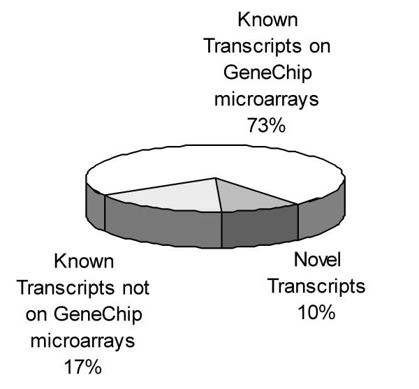 Genes not represented on Affymetrix GeneChip microarrays identified through SSH: Out of the 1940 transcripts in H56 SSH library, 1409 are represented on the U95 series GeneChip microarrays. 333 of the transcripts have matches in the DNA sequence databases searched, but are not represented on the U95 series GeneChip microarray. 198 of the transcripts have no match in any of the DNA sequence databases searched.