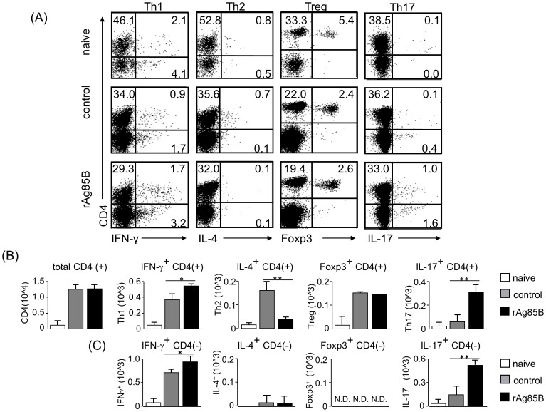 IFN-γ and IL-17-producing CD4 T cell subsets proliferated in lymph nodes after rAg85B administration. OVA-immunized (i.p., day0 and 14) and sensitized (5% aerosolized-OVA, day21 to 25) BALB/c mice were challenged with PBS or rAg85B protein (i.p. (100 µg; days 0 and 14) and i.n. (20 µg; days 21, 23, and 25)). At 24 h after the last OVA sensitization, mediastinal lymph nodes (MLNs) from naïve or OVA sensitized BALB/c mice treated with PBS or rAg85B, were harvested. MLNs were stimulated with ionomycin and PMA for 5 h, and with brefeldin A added in the last 3 h. Flow cytometry of stimulated MLNs from naïve (upper), PBS-treated (middle) and rAg85B protein-treated (lower) OVA-sensitized mice stained with specific antibodies indicated marker. Numbers in quadrants indicate percent of cells in each ( A ). Absolute numbers of various cell populations (above graphs) in lymph nodes ( B , C ). Data are representative of three independent experiments (*P