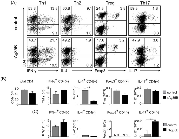 IFN-γ and IL-17-producing CD4-negative cell subsets proliferated in BAL fluid after rAg85B administration. OVA-immunized (i.p., day0 and 14) and sensitized (5% aerosolized-OVA, day21 to 25) BALB/c mice were challenged with PBS or rAg85B protein (i.p. (100 µg; days 0 and 14) and i.n. (20 µg; days 21, 23, and 25)). At 24 h after the last OVA sensitization, BAL fluid from naïve or OVA sensitized BALB/c mice treated with PBS or rAg85B, were harvested. BAL cells were stimulated with ionomycin and PMA for 5 h, and with brefeldin A added in the last 3 h. Flow cytometry of stimulated BAL cells from PBS-treated (upper) and rAg85B protein-treated (lower) OVA-sensitized mice stained with specific antibodies indicated marker. Numbers in quadrants indicate percent of cells in each ( A ). Absolute numbers of various cell populations (above graphs) in BAL fluid ( B , C ). Data are representative of three independent experiments (**P