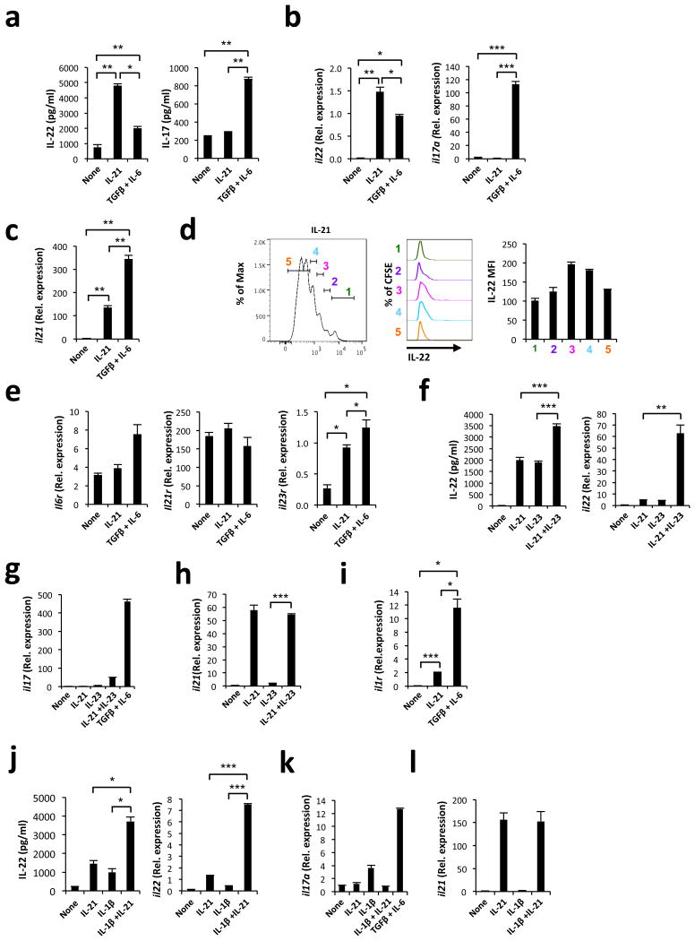 IL-21 promotes the differentiation of CD4+ T cells that produce IL-22 but not IL-17 Naïve WT CD4+ T cells were stimulated in vitro with antibodies to CD3 and CD28 in the presence of different cytokines as indicated. ( a-b ) Effect of IL-21 in the production of IL-22 and IL-17 measured by ELISA in culture supernatants ( a ) and qPCR ( b ). ( c ) Effect of IL-21 on the expression of il21 . ( e ) Effect of IL-21 on the expression of il6r, il21r, il23r . ( d ) Relationship between cell division and IL-22 expression in CD4+ T cells. CFSE-labeled naïve CD4+ T cells were activated in the presence of IL-21 and the production of IL-22 was analyzed by intracellular staining. The data are shown as the Mean fluorescence intensity (MFI) for IL-22 for each division cycle. ( e ) Effects of IL-21 on the expression of il6r, il21r and il23r . ( f-h ) Synergistic effects of IL-21 and IL-23 on IL-22 (f) and IL-17 (g) cytokine and il21 expression ( h ). (i) Effect of IL-21 on il1r expression. ( j-l ) Synergistic effects of IL-21 and IL-1β on IL-22 (j) , Il17a (k) and il21 (l) expression. mRNA expression is shown relative to gapdh . Results are representative of 3-5 independent experiments.* P