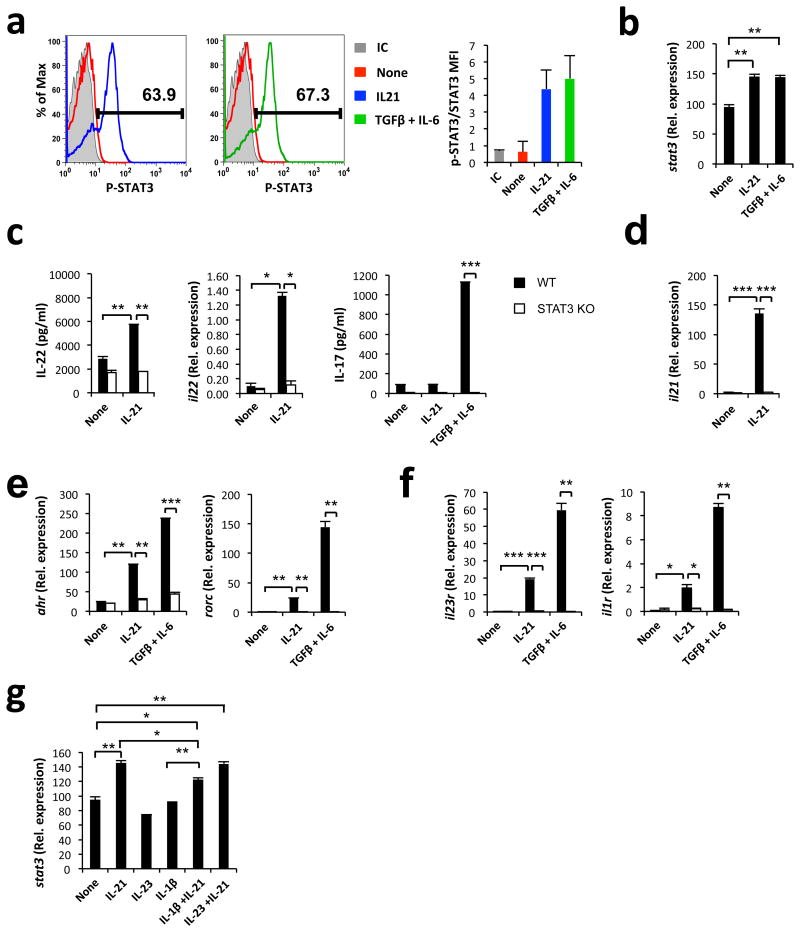 STAT3 controls the production of IL-22 by CD4+ T cells stimulated with IL-21 ( a-b ) NaïveWT CD4+ T cells were activated in the presence of IL-21 or IL-6 and TGFβ1. ( a ) FACS analysis of phosphorylated STAT3. Mean fluorescence intensity (MFI) of phosphorylated STAT3 normalized to total STAT3. ( b ) qPCR analysis of stat3 expression. ( c-f ) Naïve WT and STAT3-deficient CD4+ T cells were activated in the presence of IL-21 or IL-6 and TGFβ1. ( c ) Effect of STAT3 deficiency on IL-22 and IL-17 production. ( d ) Effect of STAT3 deficiency on il21 expression. ( e-f ) Effect of STAT3 deficiency on ahr and rorc expression ( e ) and the receptors il1r , il23r ( f ). ( g ) Induction of stat3 by IL-1β, IL-21 IL-23, IL-1β and IL-21 or IL-21 and IL-23. mRNA expression is shown relative to gapdh . Results are representative of 2-3 independent experiments. * P