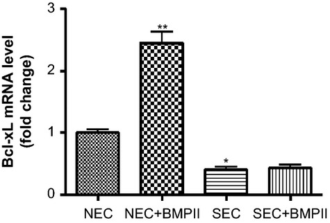 The effects of BMP2 on anti-apoptotic gene Bcl-xL mRNA. Normal and SSc-MVECs cells were treated with BMP2 (200 ng/ml) for 24 hrs. The mRNA expression levels of Bcl-xL were measured by SYBR Green real-time PCR analysis. The expression level of Bcl-xL was markedly increased in BMP2-treated normal-MVECs, but not in SSc-MVECs. Values are the fold changes compared with expression in the normal control group (ascribed an arbitrary value of 1) and are expressed as mean ± SD from triplicate experiments.* P