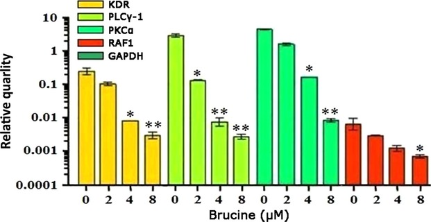 Effect of brucine on mRNA expressions of KDR, PKCα, PLCγ and Raf1 in LoVo cells. Relative ratio is shown, where KDR, PKCα, PLCγ and Raf1 signals were normalized to GAPDH signal. Data represent the means ± SD ( n = 3) with * P