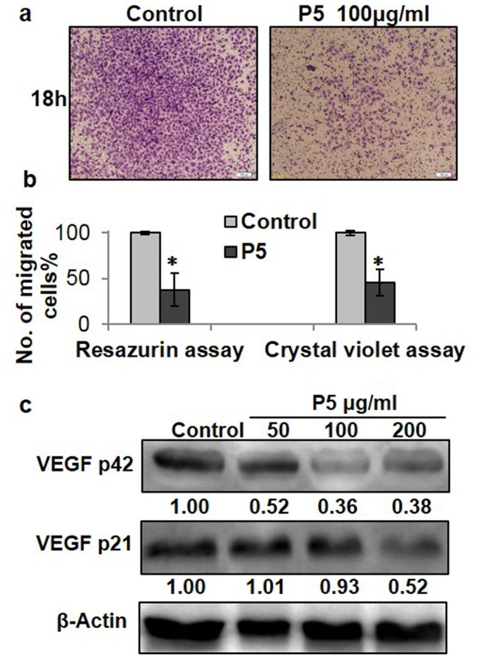 P5 reduced HUVEC cell migration and VEGF expression in HUVEC cells. P5 reduced HUVEC cell migration. The transwell assay was performed by using a 24-well chamber as the outer chambers and polycarbonate filters (8 µm pores) as the inner chambers as described in Methods . After incubation for 18 hrs at 37°C, the migrated cells on the lower surface of the filter were fixed in 90% ethanol and stained with 0.1% crystal violet. Images of the migrated cells were taken using a microscope (Olympus, CKX41, Japan) ( a ). The migrated cells were quantified at 595 nm after extraction with 10% acetic acid ( b ). Migrated cells in the outer chambers were also quantified independently by incubating the out chambers in F12 media with 10% FBS for 8 days followed by resazurin quantification ( b ). The untreated cells (control) were assigned values of 100 and the results were presented as mean ± S.D. (n = 3). Significance: *P