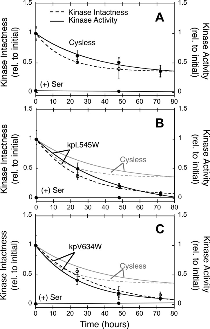 Effect of bulky kpL545W and kpV634W Trp substitutions on the ultrastability of reconstituted core complexes. Shown are 72 h decay time courses for reconstituted, washed core complexes formed on isolated E. coli membranes. Serine receptor (Tsr), histidine kinase (CheA), and adaptor protein (CheW) were mixed and incubated to reconstitute core complexes, and then the resulting membrane-bound complexes were washed to remove unbound components. Each plot summarizes the decay of intact, full-length kinase (Kinase Intactness, dashed line and empty symbols) and of kinase enzymatic function (Kinase Activity, solid line and filled symbols). In each case, the addition of attractant (Ser) fully inhibited kinase activity via native, receptor-mediated kinase regulation. Table 2 summarizes the kinetic parameters for each time course. (A) Decay of control Cysless reconstituted complexes, exhibiting both a quasi-stable component (τ = 17–34 h for 60–70% of the population) and an ultrastable component (τ ≫ 72 h for the remaining 30–40% of the population). (B) Decay of reconstituted complexes containing the kinase protein kpL545W mutation to perturb the receptor–kinase interface within the core unit, exhibiting a quasi-stable (τ = 24–41 h for 100% of the population) but no ultrastable component. (C) Decay of reconstituted complexes containing the kinase protein kpV634W mutation to perturb kinase–adaptor protein interface 1, located within the core unit. The decay exhibits a quasi-stable (τ = 25–35 h for 100% of the population) but no ultrastable component.