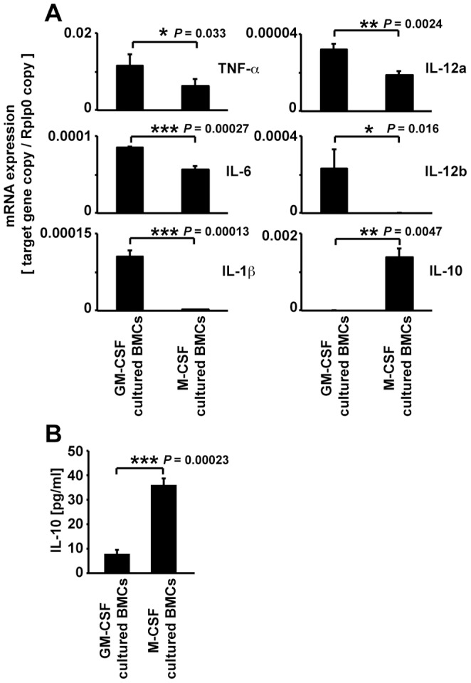Expression of cytokine mRNA, and IL-10 protein levels in M-CSF- or GM-CSF-cultured BMCs. (A) The expression of proinflammatory <t>cytokines</t> (TNF-alpha, IL-6, IL-1beta, IL-12a, and IL12b) and anti-inflammatory cytokine (IL-10) mRNA in M-CSF- or GM-CSF-cultured BMCs. (B) IL-10 concentration in the supernatant of M-CSF- or GM-CSF-cultured BMCs. Data are expressed as mean ± SEM, *** P