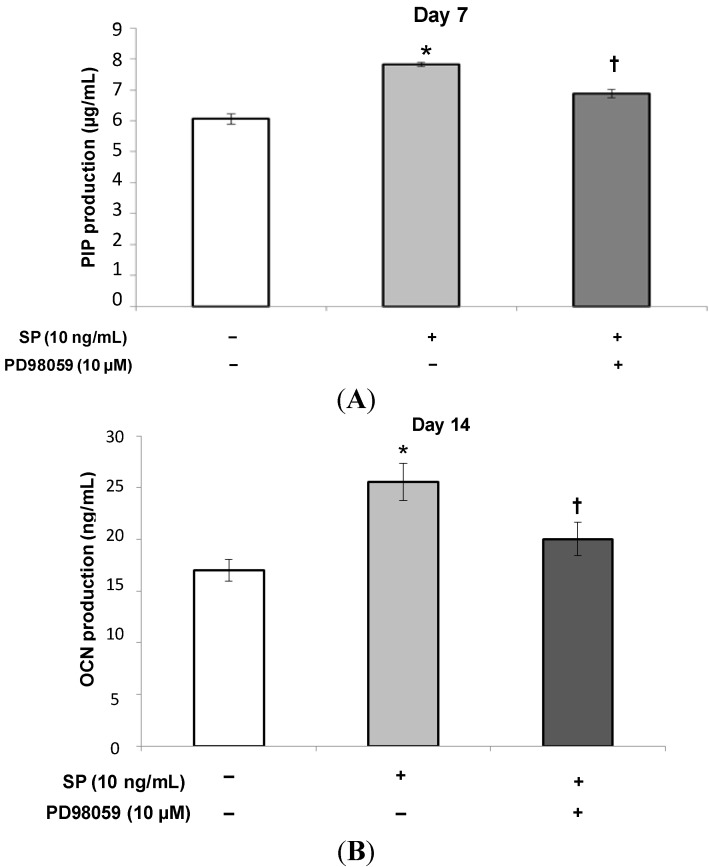 Effect of PD98059 on the production of PIP and OCN induced by SP. After the MSCs reached confluence, the culture medium was replaced with osteogenic medium containing SP (0 or 10 ng/mL), or SP (10 ng/mL) with the ERK 1/2 inhibitor, PD98059 (10 µM) and the cells were cultured for 7 ( A ) or 14 ( B ) days. * p
