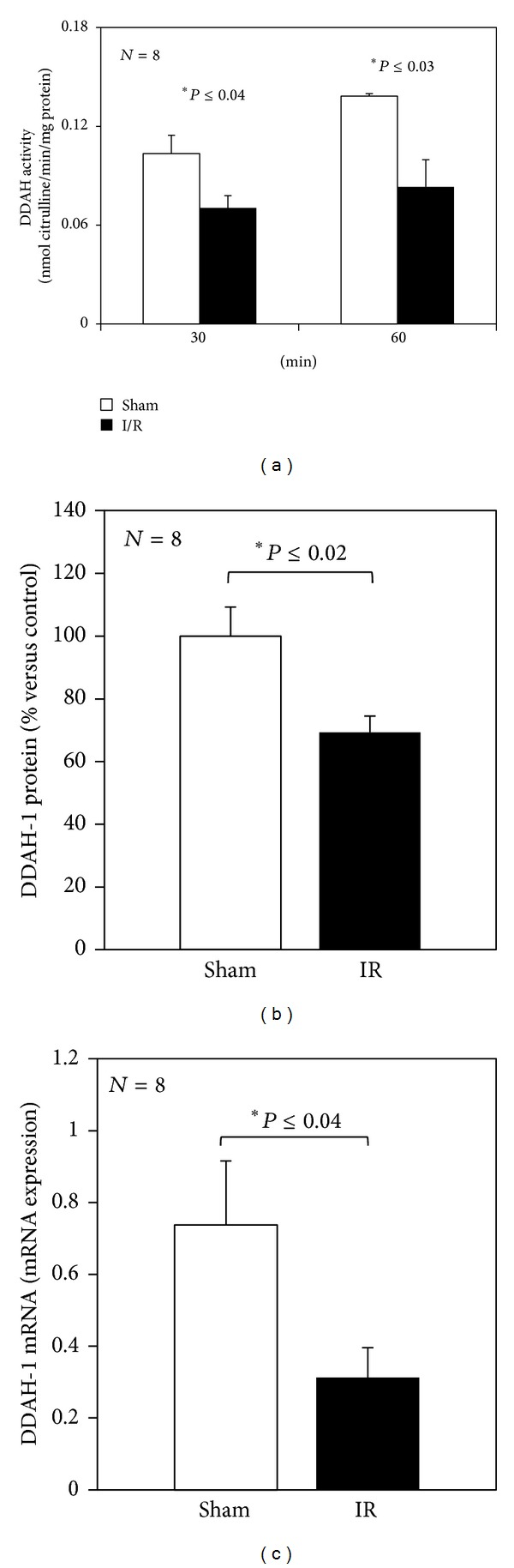 Hepatic DDAH activity and protein and mRNA expression of DDAH-1 at the end of reperfusion. Livers were submitted to 30 or 60 min ischemia followed by 60 min reperfusion, panel (a). Livers were submitted to 60 min ischemia followed by 60 min reperfusion, panels (b) and (c). Sham-operated control animals had similar manipulation without vascular occlusion. After reperfusion, liver samples were collected from all groups. The results are reported as the mean S.E. of 8 different experiments.