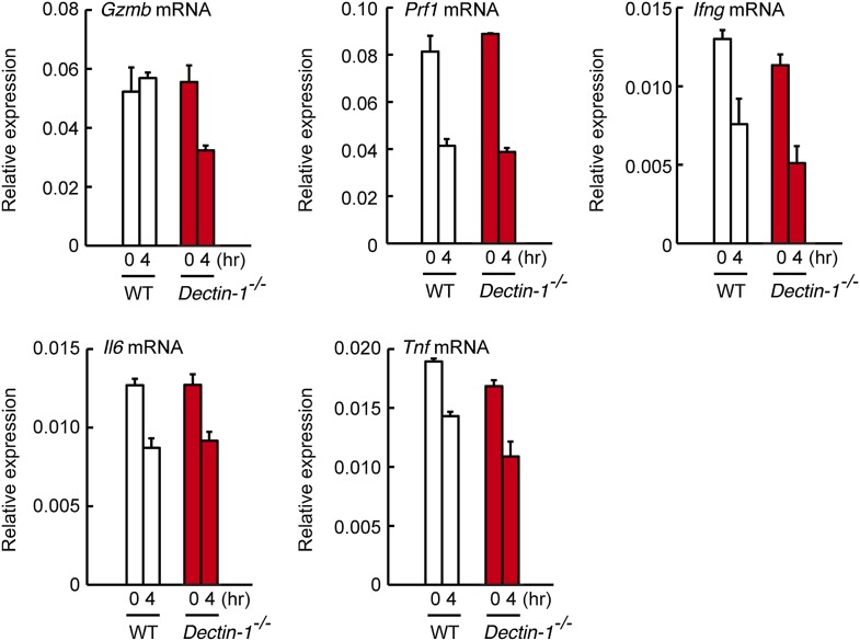 Expression levels of cytotoxic mediators and inflammatory cytokines in co-culture system. NK cells (WT; 1 × 10 5 cells) and WT or Dectin-1 −/− splenic CD11c + cells (3 × 10 5 cells) were co-cultured with B16F1 cells (1 × 10 4 cells). Total RNA was isolated at time zero and 4 hr after the co-culture and then mRNA expression levels for Granzyme B ( Gzmb ), Perforin-1 ( Prf1 ), IFN-γ ( Ifng ), IL-6 ( Il6 ), and TNF-α ( Tnf ) were analyzed by qRT-PCR analysis. Results are presented relative to the expression of Gapdh mRNA. Represented as means ± SD. DOI: http://dx.doi.org/10.7554/eLife.04177.016