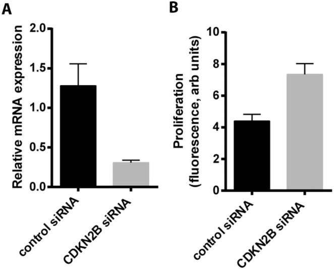 Silencing of <t>CDKN2B</t> and cell proliferation. CCL210 fibroblasts were treated with either control <t>siRNA</t> or siRNA targeted against CDKN2B. A) Levels of CDKN2B mRNA was assayed by RT-PCR (n = 3). B) Cell proliferation was measured by the CyQuant assay. Shown are the mean data from 6 replicates of a representative experiment.