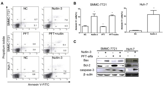 Nutlin-3 induced apoptosis in two HCC cell lines. (A) Representative Flow Cytometric graphs of Annexin V-FITC/PI double staining treated with or without nutlin-3 (10 μM) as indicated in method. (B) The apoptotic percentage was quantified via Flow Cytometry under Annexin V-FITC/PI staining. Data are shown by means ± S.D. (n = 3), *P < 0.05 vs. NC group. (C) Western blots were performed for protein expression of Bax, Bcl-2, and caspase-3. β-actin was used as the loading control.