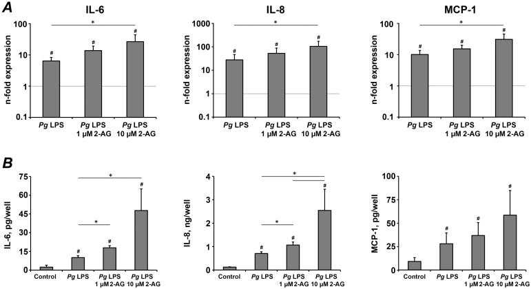 The effect of 2-AG on the production of pro-inflammatory mediators in hPdLCs in response to stimulation with P. gingivalis LPS. hPdLC were stimulated with P. gingivalis LPS in the presence or in the absence of 2-AG for 24 h and the production of pro-inflammatory mediators was measured on gene and protein levels by real-time PCR (A) and ELISA (B) respectively. A – Changes in the gene expression levels of IL-6, IL-8, and MCP-1 calculated by 2 −ΔΔCt method taking non-stimulated cells as a reference (2 −ΔΔCt = 1) and β-actin as a house-keeping gene. B – Content of pro-inflammatory mediators in the conditioned media measured by ELISA. Each value represents the mean ± s.e.m of 4 independent experiments. # Means were significantly compared to control group, tested with analysis of variance (P