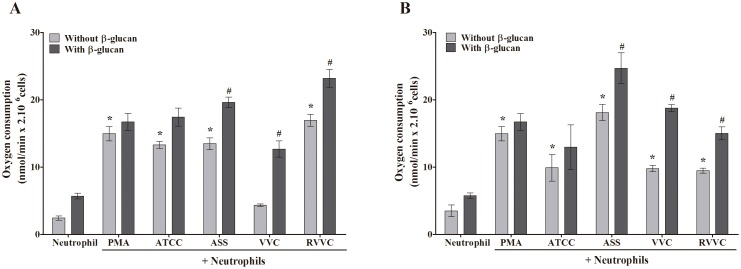 Oxygen consumption by β-glucan-treated neutrophils activated by different isolates of C. albicans and C. glabrata . Neutrophils (2.0×10 6 cells/ml) were previously treated or not with 3 mg/ml β-glucan and activated or not by the reference strain and different isolates of (A) C. albicans and (B) C. glabrata (RVVC, VVC, and ASS; 2.0×10 7 CFU/ml). Oxygen consumption was monitored for 5–10 min and calculated from the polarographic recordings using an initial concentration of dissolved oxygen of 190 µM at 37°C. The data are expressed as the mean ± SD of three independent experiments. * p ≤0.05, significant difference compared with the control group (neutrophils alone); # p ≤0.05, significant difference compared with untreated and activated neutrophils.