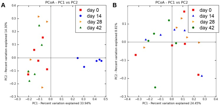 Principal coordinates analysis (PCoA) of V4 16S rRNA genes from canine fecal samples. Figures were calculated using unweighted UniFrac distances. (A) Result of dogs administered metronidazole. Metronidazole-affected samples (blue, day 14) were separated from the other samples, primarily along PCoA axis 1 (accounting for 33.94% of all variability among samples). (B) Result of dogs administered prednisolone. Prednisolone administration did not induce alteration of bacterial composition.