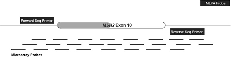 Diagrammatic representation of the 1900 bp deletion that starts in intron 9 of MSH2 and removes the first 94 bases of exon 10. This figure maps the locations of multiple overlapping microarray probes that can assess for LRs in this region. The MLH1/MSH2 MLPA kit (MRC-Holland, P003-C1) has only one MLPA probe in intron 10. The locations of the forward and reverse sequencing primers and the microarray probes that cover these regions are also depicted.