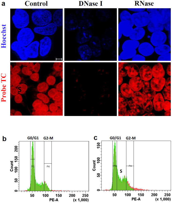 DNA-specific fluorescence probe. (a), The DNase and RNase studies in HEK 293 cell lines. Immunofluorescence staining of control and cells treated with DNase I (100 µg/mL) and RNase (40 µg/mL) with TC (red). DNA was counterstained with Hoechst (blue). Scale bar, 5 µm. (b–c), Cell cycle analysis by staining with PI and probe TC respectively. HEK 293 cells stained with 6 µg of PI and probe TC for 30 mins. FACS analysis was done by FACS aria instrument.