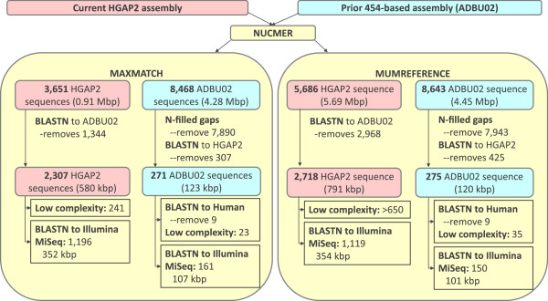 Assembly differences. The differences between the HGAP2 assembly presented here and the prior 454-based assembly are examined using NUCMER and BLASTN. The larger number of sequences uniquely in the HGAP2 assembly and the larger number of low complexity sequences suggests that the PacBio sequence data resolves more of the genome by spanning low complexity repeats. Some regions were identified in the 454-based assembly that were in the Illumina MiSeq assembly, suggesting that the sequences are missing from the HGAP2 assembly.