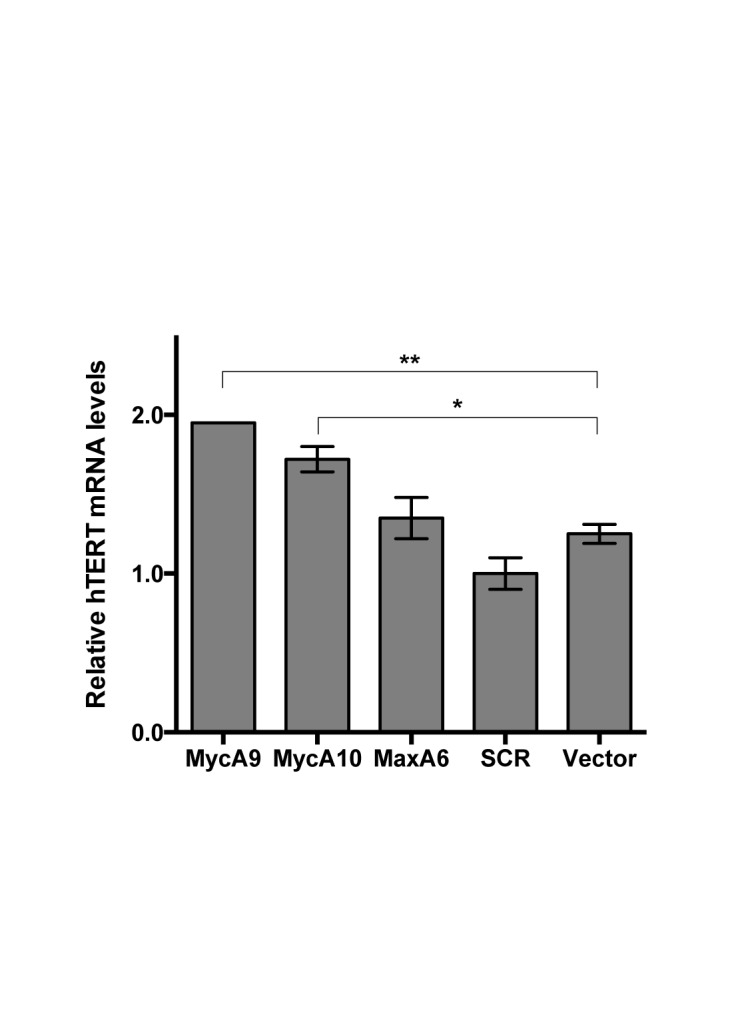 Effect of c-Myc/Max knockdown on hTERT expression in human epithelial cell line MCF10A. MCF10A cells were infected with lentiviral shRNAs and selected with 1 μg/ml puromycin for 4 days. hTERT mRNA levels were determined by quantitative RT-PCR and normalized to 18S rRNA. *, p