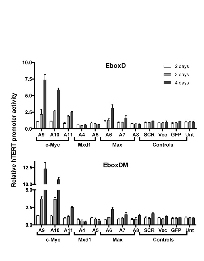 Effects on mutant hTERT promoters by EBP knockdown. Tel + H(EboxD) and Tel + H(EboxDM) cells were infected with lentiviral shRNAs. Luciferase activities were measured 2, 3 and 4 days after infection. hTERT promoter activities were determined as Rluc / Fluc .