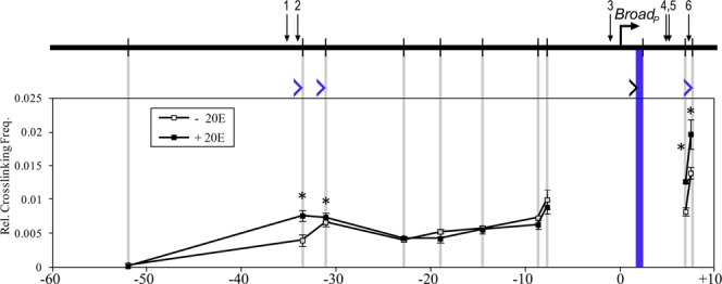 Long-distance 3C interactions at the Broad locus. Schematic of Broad is shown at the top. Horizontal arrow indicates the TSS, vertical bars indicate HindIII sites and numbered arrows designate EcREs. Cross-linking frequencies ( y -axis) between the fixed HindIII anchor at the proximal promoter and the rest of the locus were measured in S2 cells in the absence or presence of ecdysone as indicated. Locations of the fixed anchor site and test sites are marked by blue and gray bars, respectively. Black angle bracket (' > ') indicates the location and direction of the anchor primer. Blue brackets indicate the location and direction of test primers in fragments that interact with the Broad promoter, either in the presence or absence of ecdysone. Coordinates are given along the x -axis relative to the proximal TSS. Asterisk indicates significant difference between ecdysone and control samples (Paired Student's t -test, P