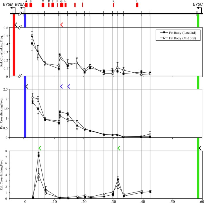 Effect of EcR knockdown on pre-existing promoter–EcRE interactions at the E75 and Broad loci. S2 cells were incubated for 3 days with or without dsRNA targeting EcR , then incubated with or without 1×10 −6 M ecdysone as indicated. Each sample was divided and used in qRT-PCR and 3C analyses. HindIII-based 3C analysis was performed, and interactions were measured between the E75 (A) or Broad (B) promoters and the EcRE(s) indicated ( x- axis). Cross-linking frequencies ( y- axis) are shown relative to the control sample. Bars indicate mean ± SEM from three independent experiments. Inset: total RNA was extracted and transcript abundance was measured by qRT-PCR for E75B , E75A , E75C and Broad core. Expression was normalized to the rp49 transcript and is shown relative to the control sample ( y -axis). Bars indicate mean ± SEM from three independent experiments. Number above each bar indicates fold change relative to control sample.
