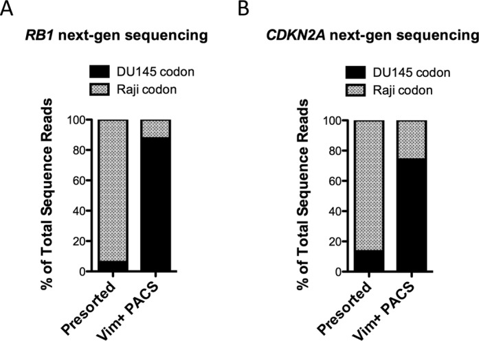 Quantitative analysis of PACS genome enrichment with next-generation sequencing. Analysis of RB1 and CDKN2A genomic loci for the presence of DU145-specific SNPs. Sequencing libraries from RB1 and CDKN2A amplicons were generated using Nextera XT reagents. ( A ) Quantitative analysis of RB1 sequence reads demonstrated that the DU145-specific nonsense mutation, AAG to TAG (see Figure 4 ), was found in 6.2% of the sequence reads generated from presorted cell lysate. Following PACS sorting (Vim+ PACS) the presence of this mutation relative to the Raji-specific codon was enriched to 87.7%. ( B ) Similar data was obtained upon sequence analysis of CDKN2A amplicons generated from presorted and Vim+ PACS sorted cell lysate. The DU145-specific missense mutation, GAC to TAC (see Figure 4 ), went from comprising 13.5% of the sequence reads to 74.2% of the sequence reads upon PACS enrichment. More than 15 000 sequence reads were analyzed for each of the four samples.