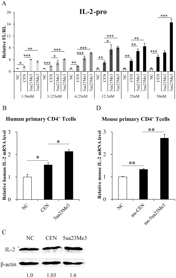Optimized siRNAs showed higher and longer efficiency on IL-2 promoter activation in human or mouse primary CD4 + T cells. (A) HEK293T cells were transfected with siRNAs at the indicated concentrations and promoters activities were determined as described above. (B) Effects of optimized siRNAs on IL-2 mRNA level in human primary CD4 + T cells. Human primary CD4 + T cells were transfected with 120 pmol siRNAs for 12 hrs, and were subsequently stimulated with anti-CD3 (1 µg/ml) and anti-CD28 (5 µg/ml) antibodies for 84 hrs. IL-2 mRNA levels were determined by qRT-PCR as described above. (C) Western blot analysis of IL-2 protein in human primary CD4 + T cells in (B). The <t>β-actin</t> was selected as an internal control. (D) Effects of optimized siRNAs on IL-2 mRNA level in mouse primary CD4 + T cells. Mouse primary CD4 + T cells were transfected with 120 pmol siRNAs for 12 hrs, and were subsequently stimulated with anti-mouse CD3 (2 µg/ml) and anti-mouse CD28 (1 µg/ml) antibodies for 84 hrs. Mouse IL-2 mRNA levels were determined by qRT-PCR and normalized to mouse GAPDH. P -values were calculated using the two tailed unpaired Student's t-test with equal variances. *, p