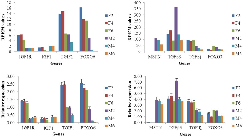 Validation of expression levels of important genes involved in muscle development and fat deposition. Note: The validation of important genes was performed by comparing of RPKM and relative expression using qRT- PCR for each tissue and time point.