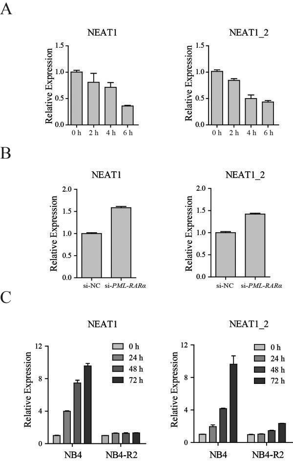 lncRNA NEAT1 is repressed in cells expressing PML-RARα and upregulated in response to ATRA. (A) qRT–PCR analysis of NEAT1 in U937-PR9 cells treated with 100 μM ZnSO 4 at the indicated time points. A time series of induction for the PML-RARα protein by ZnSO 4 is shown in Additional file 2 : Figure S2A. (B) qRT–PCR analysis of NEAT1 after knocking down PML-RARα. (C) NB4 and NB4-R2 cells were treated with 1 μM ATRA. NEAT1 was measured by qRT-PCR and normalized to the housekeeping gene ACTB . The panels show the mean ± SD of a representative experiment performed in triplicate.