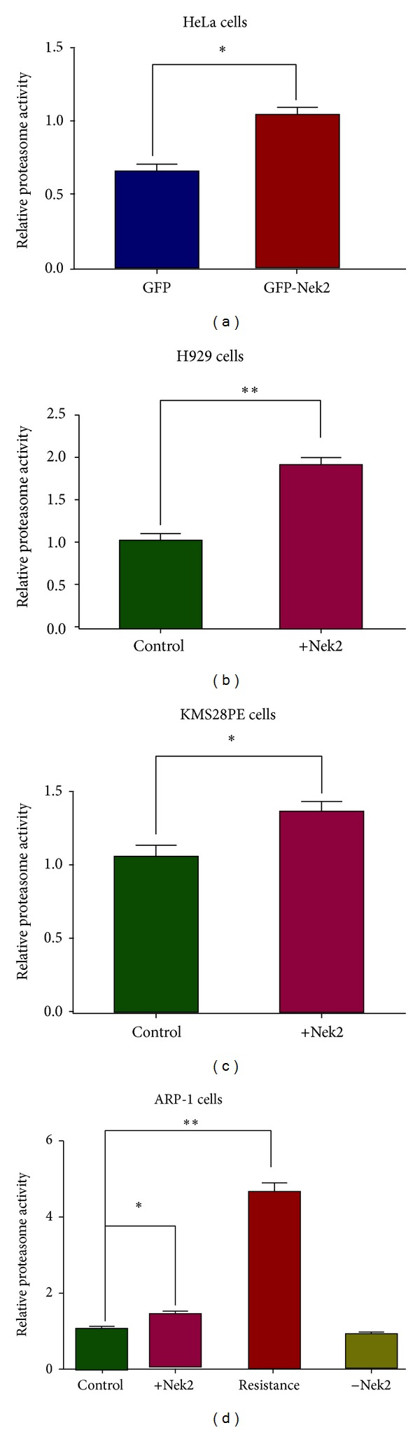 Nek2 overexpression elevates the proteasome activity in multiple cancer cell lines. (a) Proteasome activity is significantly increased in Nek2 overexpressed HeLa cells compared to GFP-transfected control. Proteasome activity was also significantly elevated in H929 (b), KMS28PE (c), and ARP-1 (d) cell lines compared to empty vector transfected (control). For the ARP-1 cell line, Nek-2-OE, NEK-2-KD, and bortezomib-resistant clones were tested in addition to wild-type cells. The 26S proteasome was isolated by ultracentrifugation and the proteasome activity was determined by Proteasome-Glo Assay. (d) For ARP1 cells, the bortezomib-resistant cells (third column in (d)) showed higher proteasome activity. For Figures 2(a) – 2(d) , * P