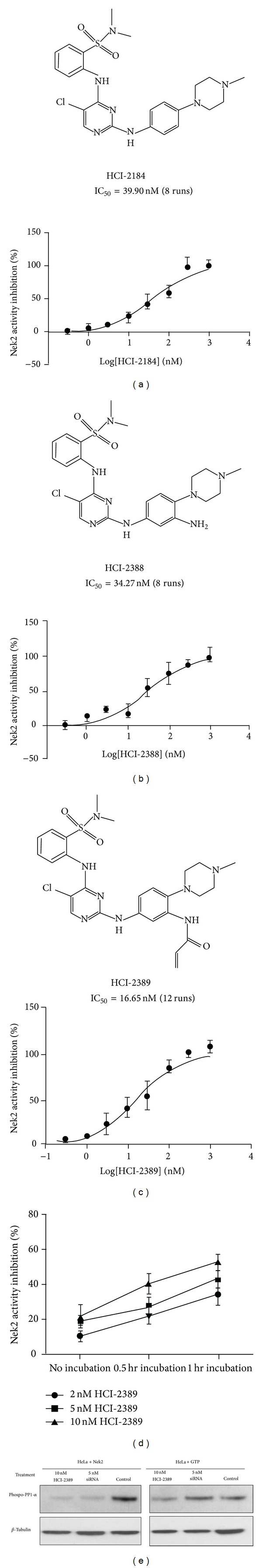 Novel Nek2 Inhibitors significantly Inhibit Nek2's activity. (a), (b), and (c), three compounds, HCI-2184, HCI-2388, and HCI-2389 were designed by virtual screening. Synthesized compounds were validated by NMR and MS. The abilities of the three compounds to inhibit Nek2 kinase were tested by Kinase-Glo Assay. (d) HCI-2389 acts as an irreversible Nek2 inhibitor. A 0.5 hr incubation of HCI-2389 and Nek2 kinase increased the ability of HCI-2389 to inhibit Nek2. This effect was more pronounced when HCI-2389 was incubated with Nek2 kinase for 1 hr. (e) 10 nM HCI-2389 treatment for 72 hours greatly decreased the level of phosphorylated PP1-α in both Nek2 overexpressed HeLa cells and GFP controls. The effect was equal to or greater than treatment with 5 nM Nek-2 siRNA.