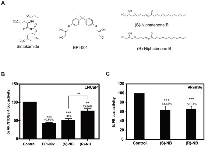 Niphatenone B enantiomers block transactivation of AR NTD. (A) Chemical structures of sintokamide, EPI-001, and niphatenone B enantiomers. (B) Transactivation assay of the AR NTD performed in LNCaP cells that were co-transfected with Gal4UAS-TATA-luciferase and AR-(1-558)-Gal4 DBD prior pre-treatment for 1 hour with 25 µM EPI-002, 7.0 µM niphatenones or DMSO vehicle control. Transactivation of AR NTD was induced by incubation with <t>IL-6</t> (50 ng/ml) for 24 hours. Luciferase activity was normalized to protein concentration. (C) Niphatenones inhibit the constitutively active AR V567es splice variant. Cos-1 cells co-transfected with PB-luciferase and an expression vector for ARvar567 were treated with each niphatenone B (1 µM) or DMSO vehicle control. After 24 hours of exposure, cells were harvested and luciferase activities were normalized to protein concentrations of the samples. Data represent the mean ± SEM of n = 3 separate experiments with triplicate wells. Student's t test: ** P