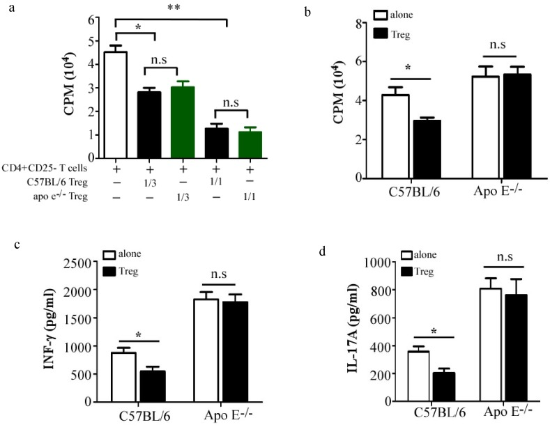 Resistance of pro-inflammatory T cells to suppression, instead of impaired Treg cells, contributes to the ongoing inflammatory response in atherosclerotic Apo E −/− mice. (a), 6×10 4 CD4 + CD25 − T cells from C57BL/6 mice were stimulated with 3 µg/ml CD3 and 1 µg/ml CD28, in the presence or not of indicated numbers of Treg from 20-week old Apo E −/− mice or age-matched C57BL/6 mice for 3 days. 1 µCi of [3H] thymidine was added in each well 18 hrs before harvest, T cell proliferation was determined by [3H] thymidine incorporation. Data are the mean ± SEM (n = 4) of one representative experiment out of three performed. CD4 + CD25 − T cells isolated from 20-week old Apo E −/− mice or age-matched C57BL/6 mice were cultured alone or with Treg cells isolated from 20-week old Apo E −/− mice at 3∶1 ratio, T cell proliferation was examined as shown in (b). The amounts of IFN-γ (c) and IL-17A (d) in supernatant were measured by ELISA (n = 4). Data are representative of three independent experiments. n.s = not significant; *p
