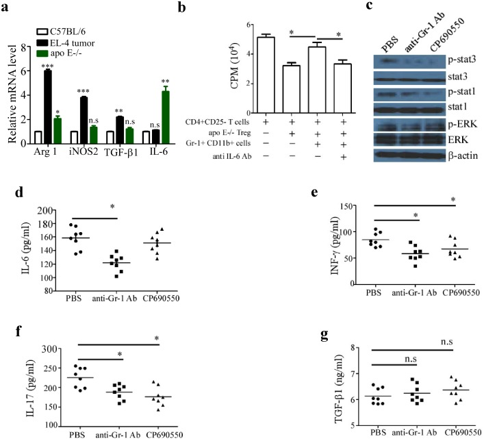 Gr-1 + CD11b + cell-induced unresponsiveness of pro-inflammatory T cells to suppression is IL-6 dependent. (a), Gr-1 + CD11b + cells were isolated from the spleen of 20-week old Apo E −/− and C57BL/6 mice and EL-4 tumor-bearing mice. The mRNA expression of Arg 1, iNOS 2, TGF-β1 and IL-6 was measured by qRT-PCR. (b), CD4 + CD25 − T cells from C57BL/6 mice were cultured with or without Gr-1 + CD11b + cells and Treg cells as well as 20 µg/ml IL-6 antibody, T cell proliferation was determined by [3H] thymidine incorporation. Data are the mean ± SEM (n = 4) of one representative experiment. Atherosclerotic Apo E −/− mice were pre-treated i.p. with 100 µg RB6-8C5 mAb or Jak inhibitor tofacitinib (CP-690,550) 30 mg/kg twice a week, (c), Phosphorylation of stat1 and stat3 as well as Erk was detected by immunoblot. Shown is one representative experiment out of three. the serum levels of IL-6 (d), INF-γ (e), IL-17A (f) and TGF-β1 (g) were measured by ELISA. Data are the mean ± SEM (n = 4) of one representative experiment. Similar results were obtained in at least three independent experiments. n.s = not significant; *p