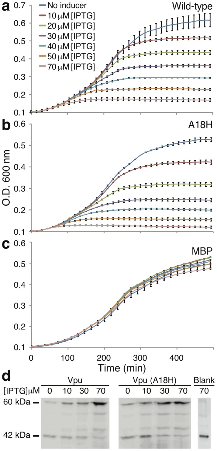 Growth curves of DH10B bacteria expressing two different Vpu channels: wild-type (a) and the A18H mutant (b) as a function of inducer concentration (IPTG). Both channels are expressed as a chimeric construct fused to the C-terminus of the maltose binding protein (MBP). Panel c, as a control, depicts the same experiment but with MBP without a channel attached to it. Panel d presets a Western blot analysis (using anti-MBP antibody) of chimeric protein expression at different concentrations of the IPTG inducer. An empty plasmid, as a negative control is presented to show expression of native MBP protein in the bacteria (labeled blank).