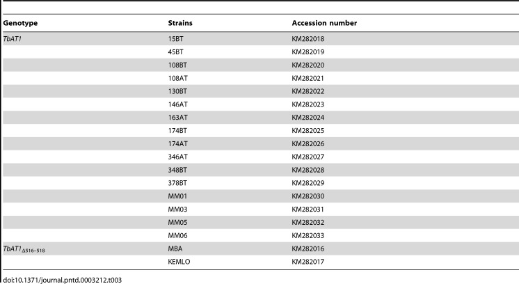 Amplicons generated with TbAT1 -PCR on DNA of the T.b. gambiense strains as listed in Table 1 and of the two T.b. brucei control strains. Lanes 1, 26, 27 and 52 = GeneRuler 100 bp Plus DNA Ladder (Fermentas), lanes 2 to 44 = T.b. gambiense strains isolated from Mbuji-Mayi, lanes 45 to 48 = T.b. gambiense strains isolated from Masi-Manimba, lane 49 = T.b. brucei 427 WT, lane 50 = T.b. brucei 427 AT1/P2 KO, lane 51 = negative PCR control.
