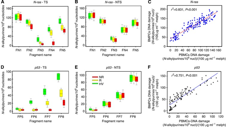 Region-specific repair of melphalan-induced damage along the active N-ras and p53 genes in PBMCs. Box plots are showing the statistical distribution of melphalan-induced N- alkylpurine levels in healthy volunteers (HV) and MM patients, responders (R) and non-responders (NR), in different regions of the TS ( A , D ) and the NTS ( B , E ) of the N-ras ( A , B ) and p53 ( D , E ) genes. The horizontal lines within the boxes represent the median value and the vertical lines extending above and below the boxes indicate maximum and minimum values, respectively. Correlation between DNA damage in malignant BMPCs and DNA damage in PBMCs from the same patients in the N-ras ( C ) and p53 ( F ) genes. Abbreviations: melph=melphalan; nucl=nucleotides.