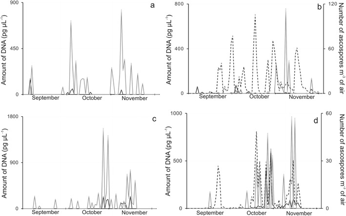 Seasonal fluctuations in DNA quantities or ascospore counts obtained by sampling airborne propagules collected over two autumns ( a , b ; 2006 and c , d ; 2008) periods on Melinex tapes of a Burkard 7-day volumetric air sampler located in Poznan, Poland. Quantitative PCR assays detected avirulence alleles AvrLm1 ( a , c ; black line ), AvrLm6 ( a , c ; grey line ) or with primers based on β -tubulin ( b , d ; black line ) or e rg11 ( b , d ; grey line ) fragments in the propagules of Leptosphaeria maculans . Ascospore release patterns ( b , d ; dotted line ) were determined by light microscopic counts of Leptosphaeria -like ascospores per m 3 of air