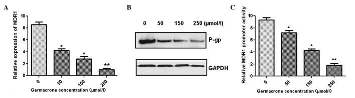 Germacrone treatment decreased the expression of MDR1. (A) Quantitative polymerase chain reaction and (B) western blot analysis were used to determine the gene expression of MDR1 and protein expression of P-gp in MCF-7/ADR cells. GAPDH was used as a protein loading control. (C) The dual luciferase assay was used to measure the MDR1 promoter activity. Data are presented as the mean ± standard deviation. Each experiment was repeated at least three times. MDR1; multidrug resistance 1; P-gp, P-glycoprotein.