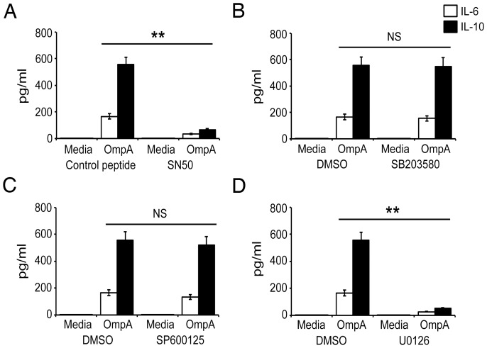 Effect of NF-κB-, p38-, JNK- and ERK-specific inhibitors on OmpA-stimulated production of IL-6 and IL-10. ( A-D ) B cells were purified from spleen, cultured for 1 h with vehicle or the inhibitors of NF-κB (SN50; 100 µg/ml), A , p38 (SB203580; 5 µM), B , JNK (SP600125; 5 µM), C , MEK1/2 (U0126; 5 µM) D , followed by incubation with OmpA (5 µg/ml). After 72 h of culture, the IL-6 and IL-10 levels in the cell supernatants were determined via sandwich ELISA. The data are the mean ± S.E.M of three independent experiments. **, p