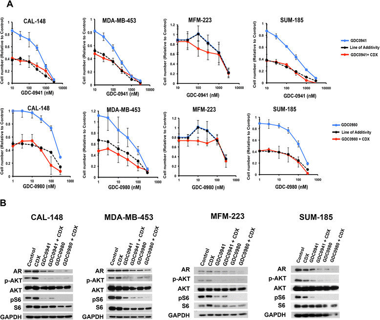 Pharmacological targeting of androgen receptor (AR) with bicalutamide (CDX) is additive in combination with of GDC0941 and GDC0980 in AR + triple-negative breast cancer (TNBC) cell lines. (A) Line graphs show viability of AR + cell lines treated with increasing concentrations of GDC-0941 (top) or GDC-0980 (bottom) alone (blue) or in combination (red) with 25 μM CDX. Dashed black line depicts the theoretical line of additivity of both drugs determined from the effect of CDX alone and either GDC-0941 or GDC-0980 alone. Error bars represent SD for three independent experiments. (B) Immunoblots from AR + TNBC cell lines treated with either CDX (25 μM), GDC-0941 (300 nM) or GDC0980 (100 nM) as single agents or CDX in combination with either GDC-0941 or GDC-0980 for 48 h analyzed for AR, p-AKT, AKT, p-S6, S6 and glyceraldehyde-3-phosphate dehydrogenase (GAPDH) protein.
