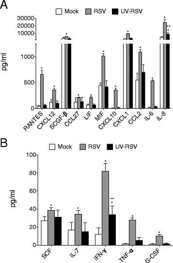 RSV replication induces host cytokines production in airway epithelial cells. A549 cells were treated with mock, RSV or UV-inactivated RSV (UV-RSV) for 24 hours. (A-B) Secreted cytokines were analyzed by multiplex or ELISA. Graphs are represented as mean cytokine concentration (pg/ml) ± S.E.M, with each measurement performed 3 times on 6 replicates/group. Samples were collected from 3 experiments performed on separate days. * and ** represent a p value less than 0.05 compared to mock or RSV treated cells for each cytokine target, respectively.