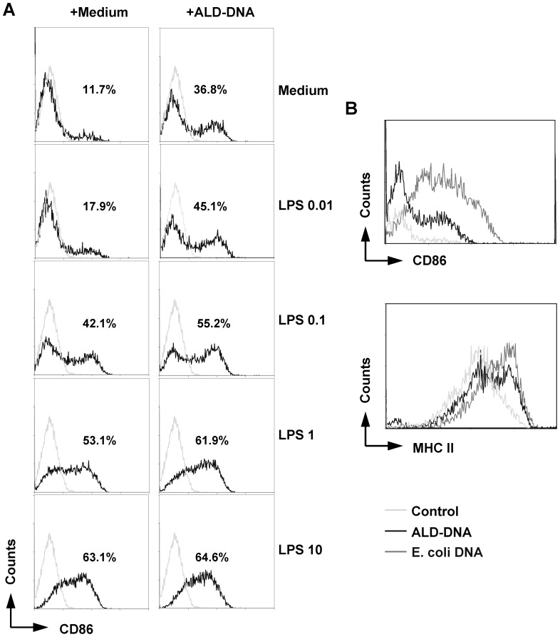 Up-regulation of CD86 and MHC class II expression in naïve B cells by ALD-DNA stimulation. ( A ) Naïve B cells were incubated with ALD-DNA (50 µg/ml) in the presence or absence of LPS ranging from 0.01 µg/mL to 10 µg/ml for 72 h. The numbers of CD86-expressing B cells after each treatment were determined by flow cytometry. ( B ) Naive B cells were stimulated with ALD-DNA or E. coli single-stranded (ss) DNA (both at 50 µg/ml) for 72 h. CD86 and MHC class II expression was determined by performing flow cytometry. Histogram plots show the mean fluorescence intensity (MFI) of these surface molecules. The data are representative of three independent experiments.