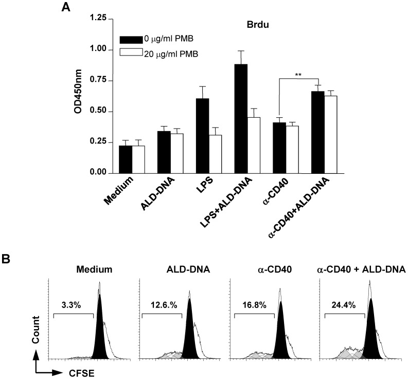 Enhancement of CD40-stimulated naïve B cell proliferation by ALD-DNA. ( A ) Naïve B cells were pre-incubated for 20 min with polymyxin B (PMB; 20 µg/ml) before the addition of ALD-DNA (50 µg/ml), LPS (100 ng/ml), anti-CD40 (1 µg/ml), LPS (100 ng/ml) plus ALD-DNA (50 µg/ml), or anti-CD40 (1 µg/ml) plus ALD-DNA (50 µg/ml). After 72 h stimulation, cell proliferation was detected by performing BrdU incorporation assay using ELISA. Data are presented as the means ±SEM of three independent experiments. ( B ) CFSE-labeled naïve B cells were cultured in media containing ALD-DNA, anti-CD40, or both (at the concentrations as described above) for 72 h. Cell division was monitored by measuring the dilution of CFSE. Shaded areas show the cell division peaks predicted by the ModFit software. Results from one representative experiment of three are shown. ** P