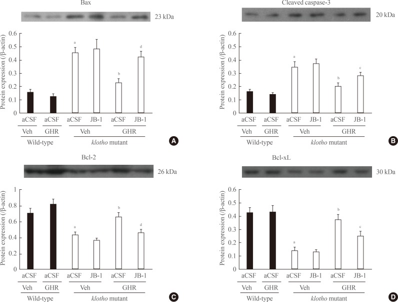 Effect of JB-1, an insulin-like growth factor-1 (IGF-1) receptor antagonist, on the growth hormone (GH)-releaser diet-mediated attenuation of changes in the expression of (A) Bax, (B) cleaved caspase-3, (C) Bcl-2, and (D) Bcl-xL in the hippocampus of klotho mutant mice. Each value is the mean±SEM of six animals. aCSF, artificial cerebrospinal fluid; Veh, vehicle diet; GHR, GH-releaser diet. a P