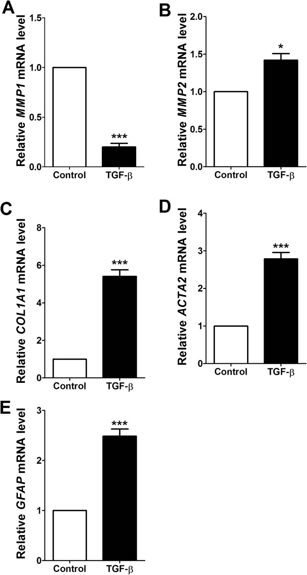 Effects of TGF-β treatment on the activation of HSCs. Relatively expressed MMP1 (A) , MMP2 (B) , COL1A1 (C) , ACTA2 (D) , and GFAP (E) mRNA levels were measured by real-time quantitative PCR. Experiments were carried out at least twice performed in triplicate. Statistical significance determined by one-way ANOVA; values are means ± SEM; *, p