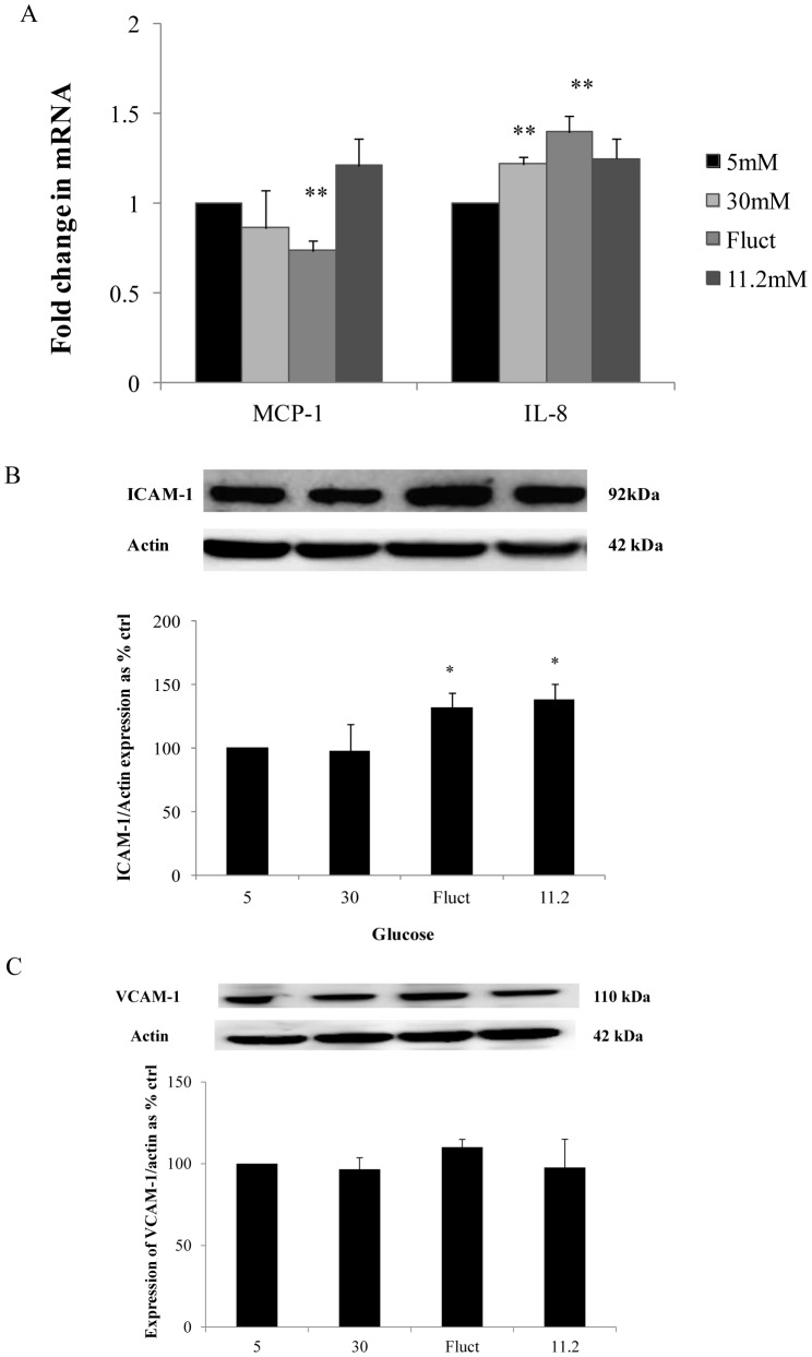 Expression of cytokines and cell adhesion molecules with exposure to defined conditions for 72 hours. (A) Reduction in MCP-1 transcription was detected in the fluctuating glucose limb whereas an increase in IL-8 transcription was detected in the 30 mM glucose and fluctuating glucose limbs with maximal increase in cells exposed to fluctuating glucose concentrations for 72 hours. (B) ICAM-1 protein expression increased in both the fluctuating and 11.2 mM glucose limbs however; (C) VCAM-1 expression was not induced by any experimental condition. Normalized results are expressed as mean ± SEM, n = 4. *P